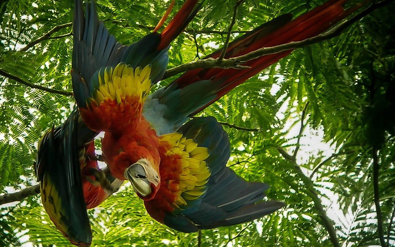 Birdwatching-Manuel-Antonio-Tours-0001