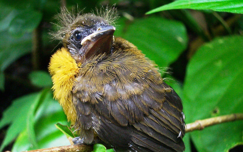 Birdwatching-Manuel-Antonio-Tours-00014