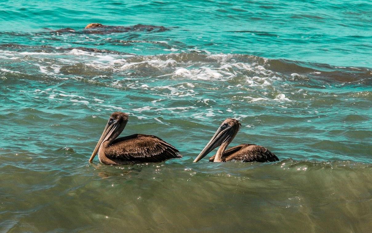 Birdwatching-Manuel-Antonio-Tours-0002
