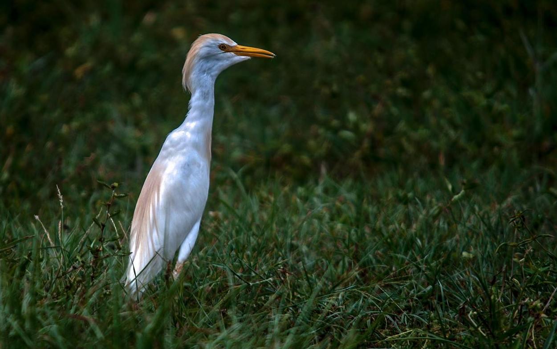 Birdwatching-Manuel-Antonio-Tours-0003