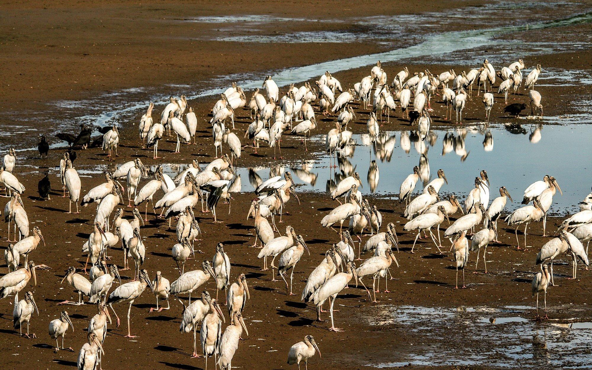 Birdwatching-Manuel-Antonio-Tours-0004