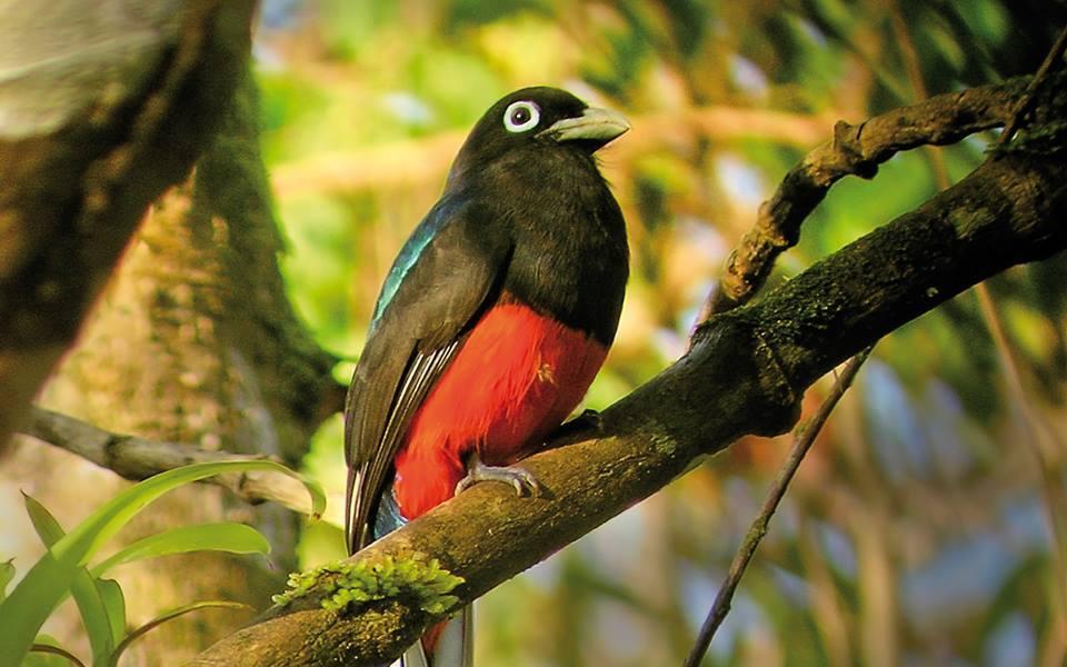 Birdwatching-Manuel-Antonio-Tours-0006
