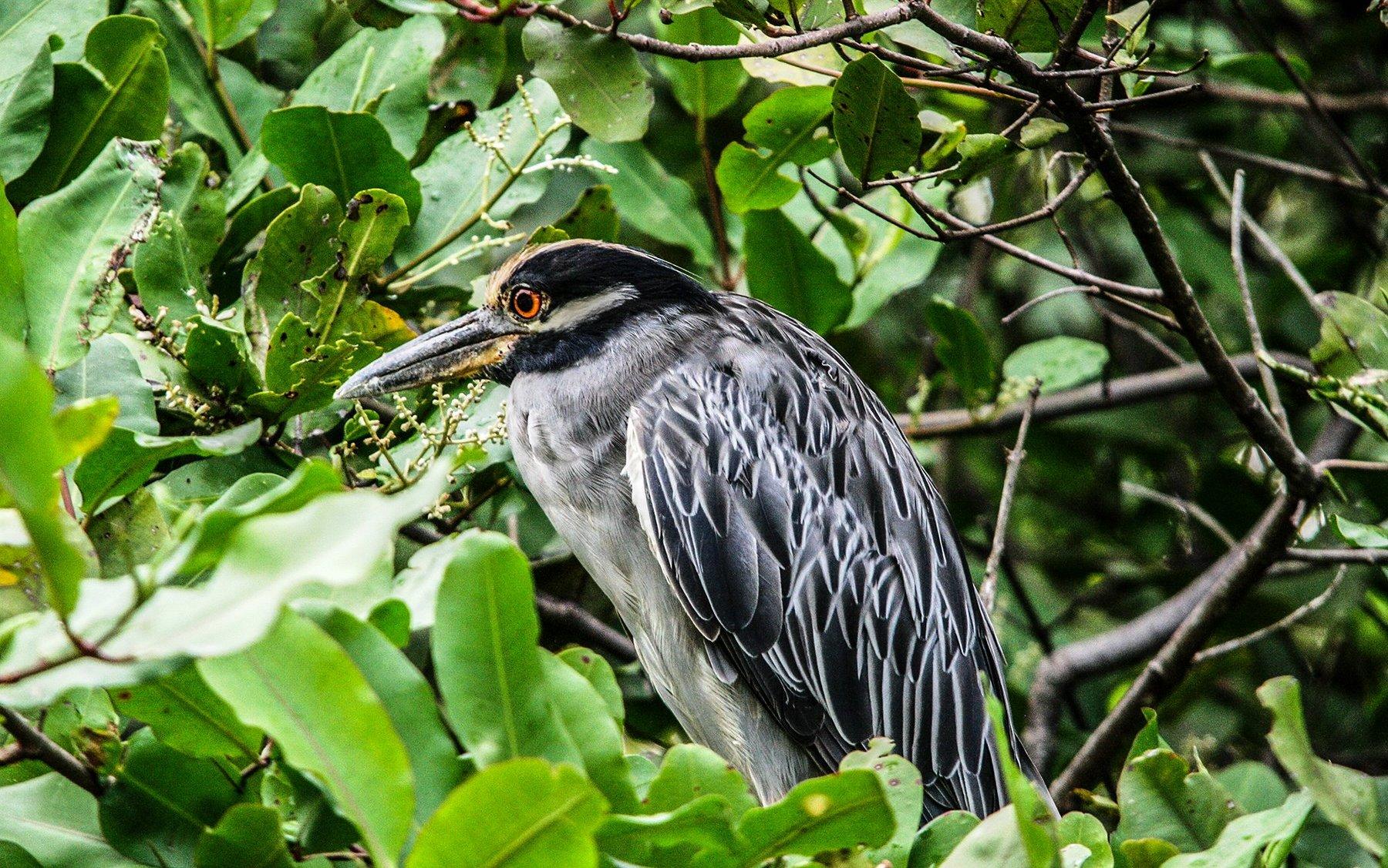 Birdwatching-Manuel-Antonio-Tours-0007