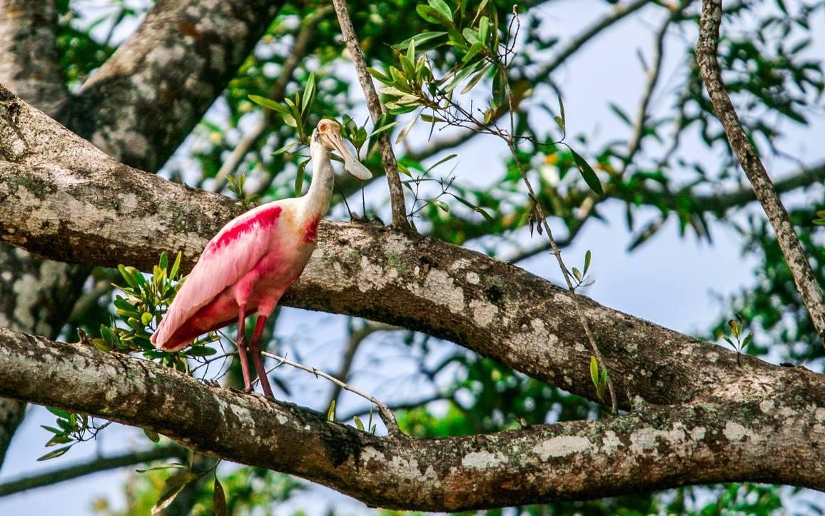 Birdwatching-Manuel-Antonio-Tours-0008