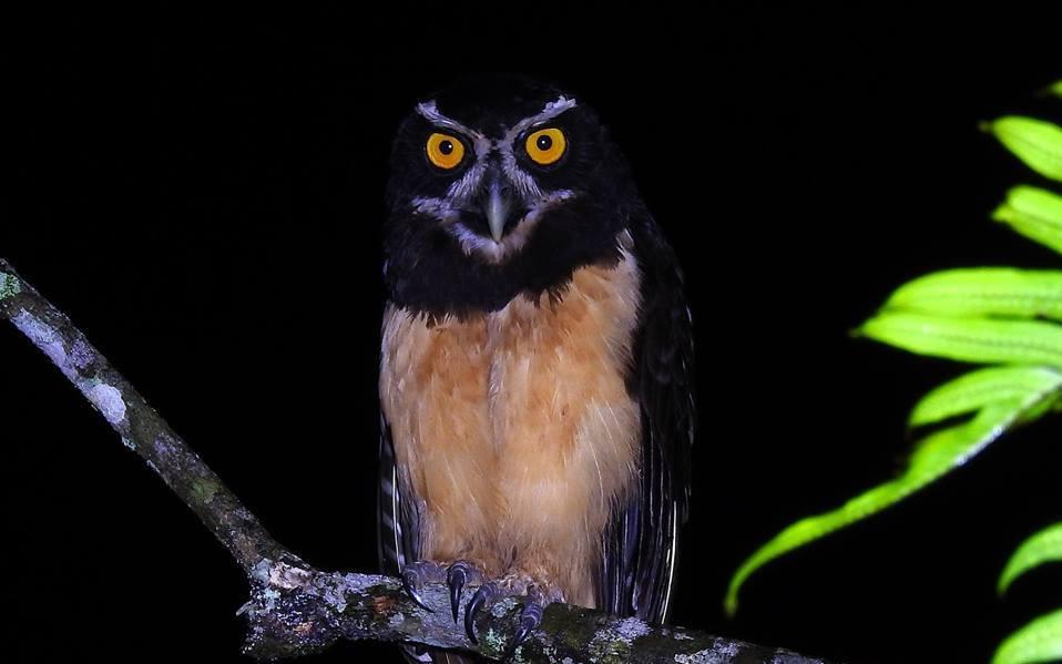 Birdwatching-Manuel-Antonio-Tours-0010