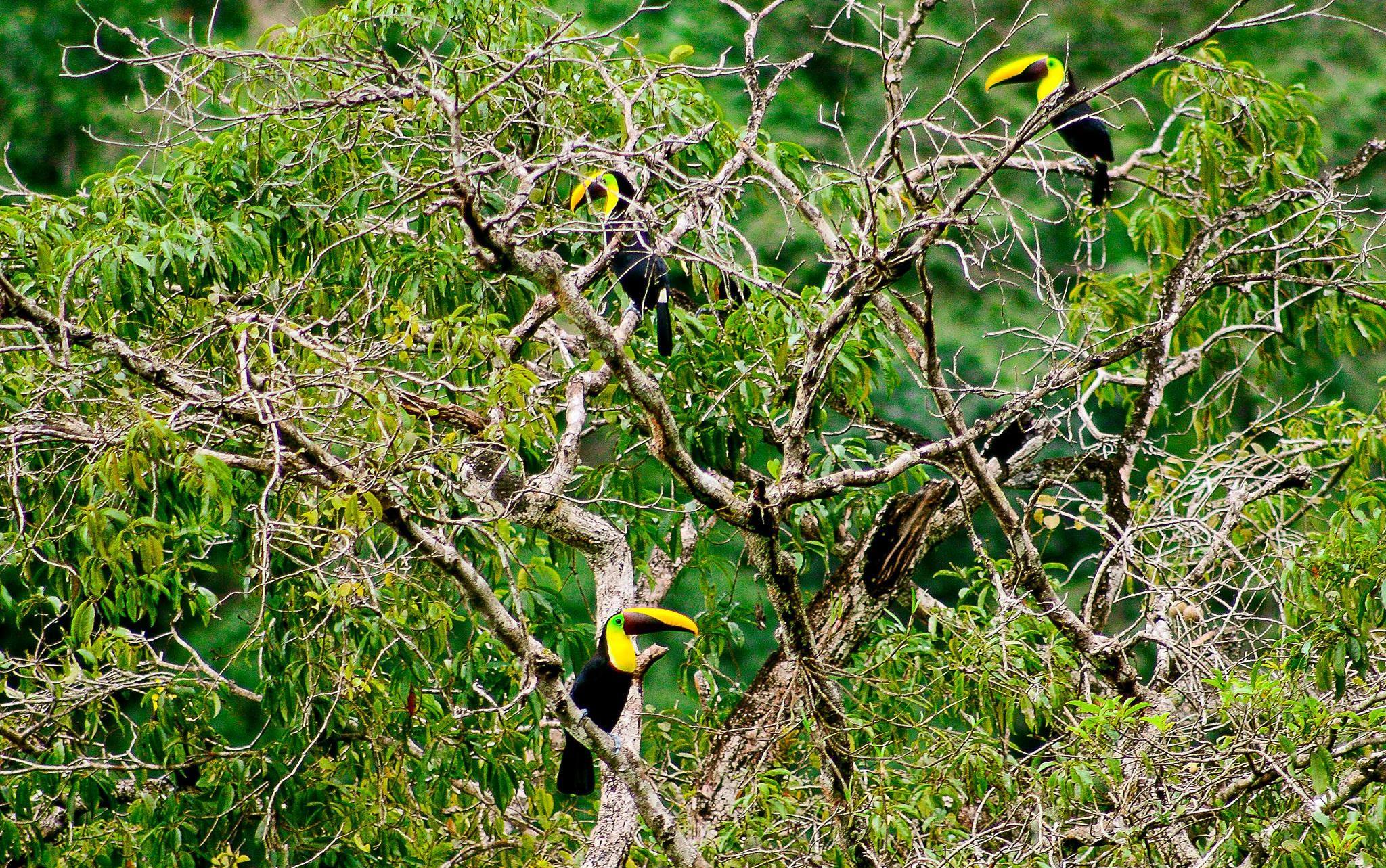 Birdwatching-Manuel-Antonio-Tours-0011