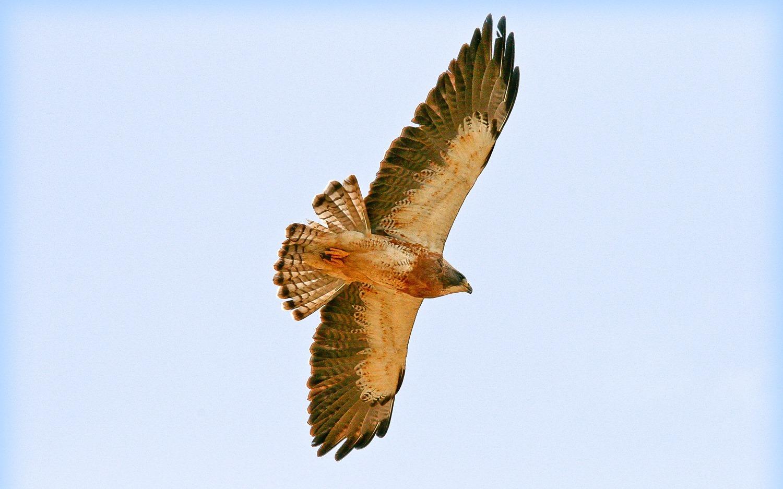 Birdwatching-Manuel-Antonio-Tours-0012