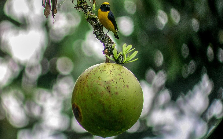 Birdwatching-Manuel-Antonio-Tours-0013
