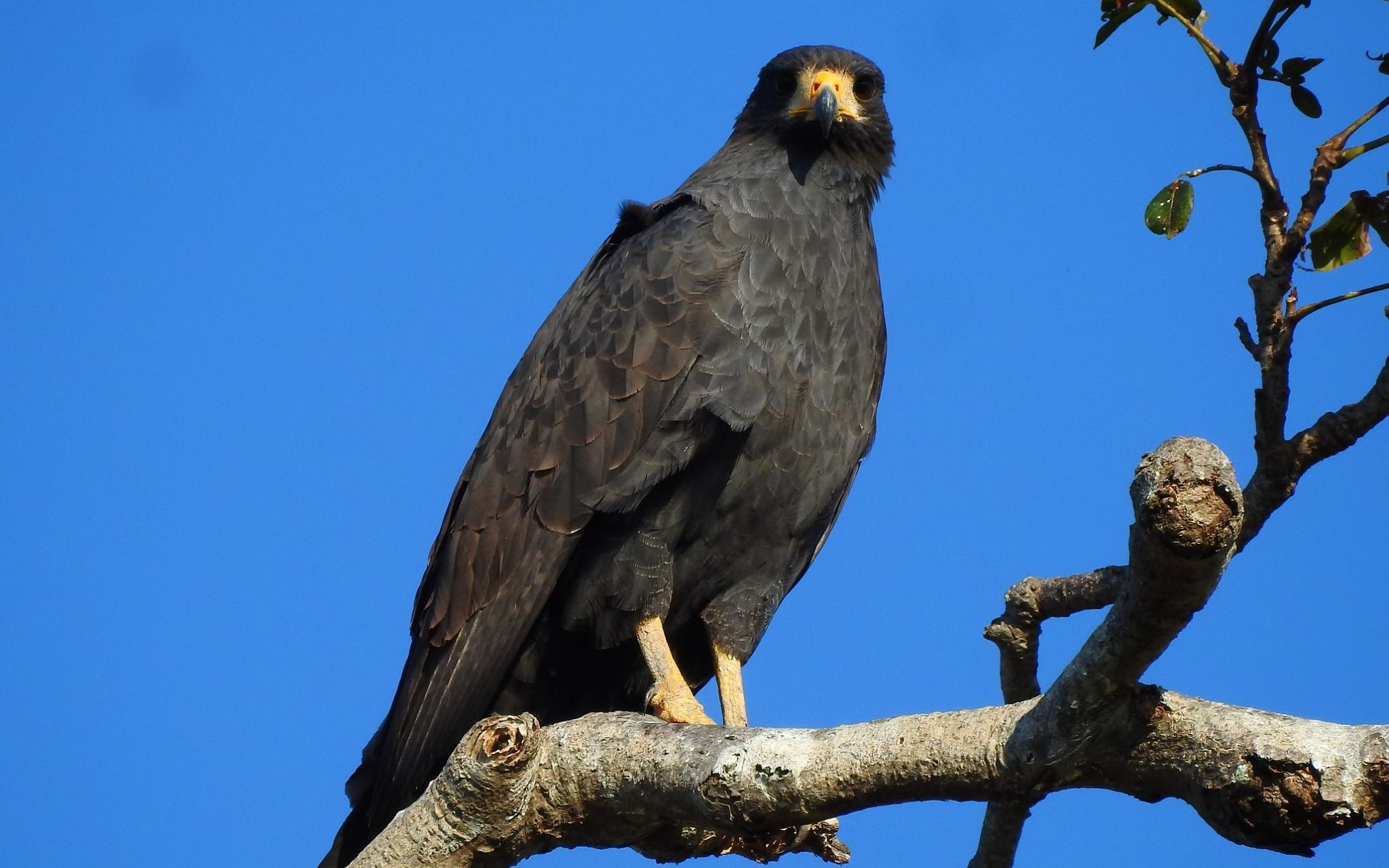 Birdwatching-Manuel-Antonio-Tours-0017